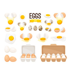 Fresh and boiled eggs vector