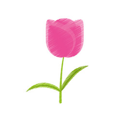 drawing tulip flower romantic plant vector image vector image