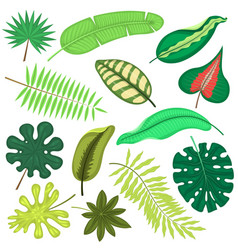 tropical leaves plant tropic leaf foliage vector image vector image