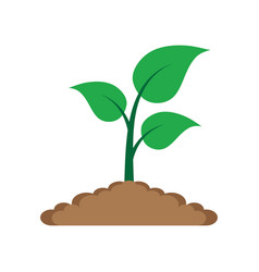 sprout in the ground vector image