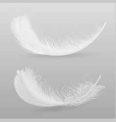 Birds white feather realistic vector