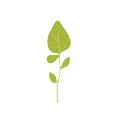 Green fresh oregano leaf vegetarian healthy food vector