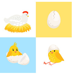 hen and chick vector image