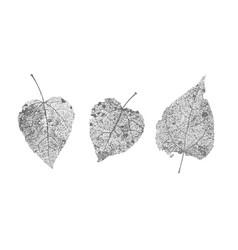 Set black gray skeletons leaves on white vector