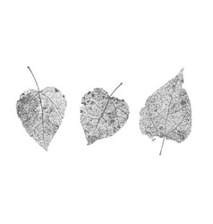 set of black gray skeletons leaves on white vector image