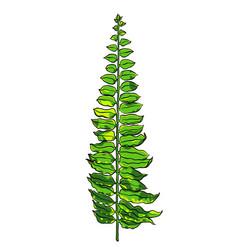 tropical leaf botanical hand drawn vector image