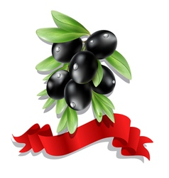 black olive branch with red ribbon vector image vector image