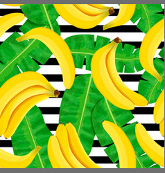 Bunch ripe bananas on white background striped vector