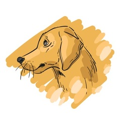 Hand drawn of gold retriever dog vector image