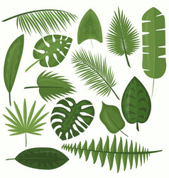 set tropical green leaves vector image