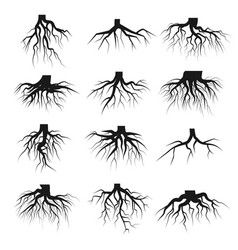 tree roots set vector image