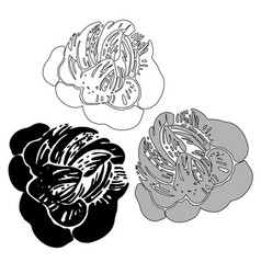 flowers peonies in black and white style vector image