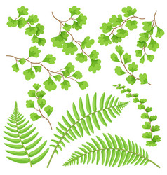green fern leaves set vector image