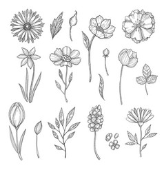 hand drawn flowers various pictures vector image