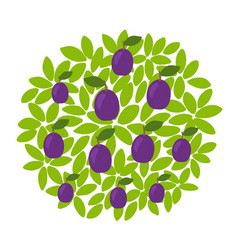 Plum fruits tree against round background vector