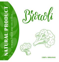 vegetable food banner broccoli sketch organic vector image