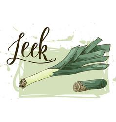 Vegetable food banner leek sketch organic food vector