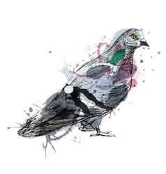 Colored hand sketch of a pigeon vector image vector image