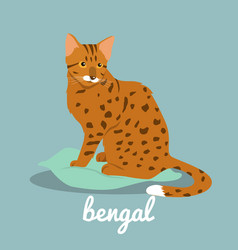 bengal cute cat on sky blue background vector image vector image
