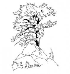 coniferous tree vector image vector image