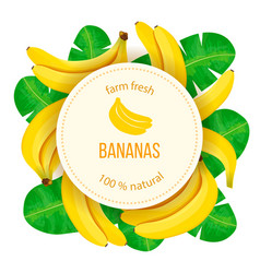 Bunch ripe bananas with leaves on white vector
