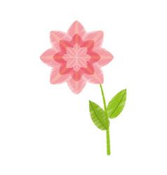 Drawing petunia flower nature spring vector