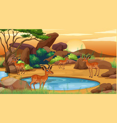 scene with many deers at open zoo vector image