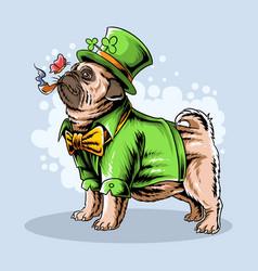 st patricks day cute pug smokes a cigar vector image
