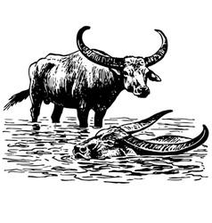 water buffalo vector image