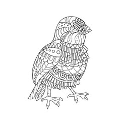 Sparrow coloring book vector