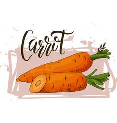 Colorful sketch vegetable healthy food poster vector