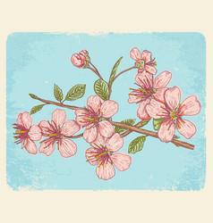 postcard with sakura vector image vector image