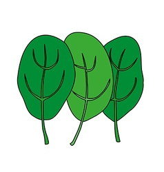 Cartoon of green fresh spinach Vegetarian food vector image