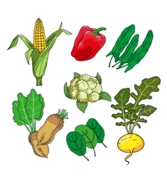 herbs and vegetables vector image