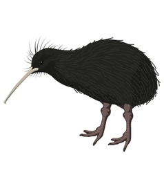 Kiwi bird detalised on white background in vector