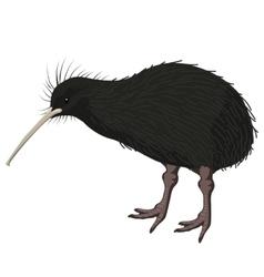kiwi bird detalised on white background vector image