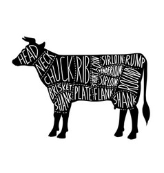 meat cuts chart for butcher shop with black cow vector image