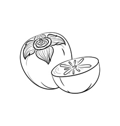 Hand drawn persimmon sketches vector image