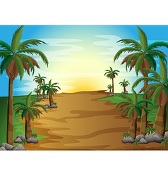 A forest with many palm trees vector image