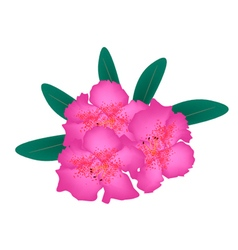 Pink Rhododendron with Green Leaves vector image