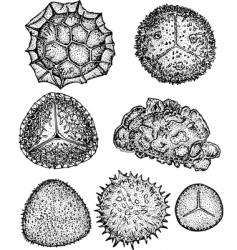 Spores vector