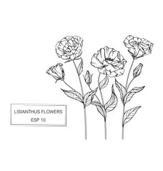 Lisianthus flower drawing vector
