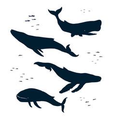 marine mammals silhouette vector image