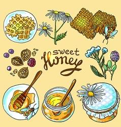 Sweet honey vector