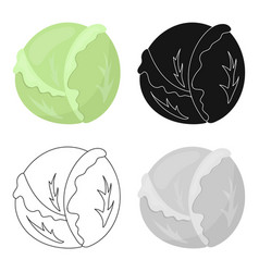 cabbage icon cartoon singe vegetables icon from vector image