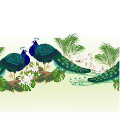 border seamless background peacock beauty vector image