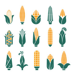 Corn cobs icons for cereal or grain vector