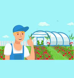 Farmer growing strawberries vector