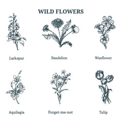 Wild flowers hand drawn vector