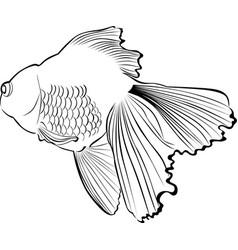 goldfish carp vector image vector image